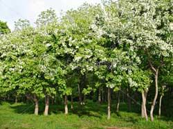 Деревья для сада